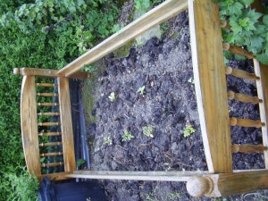 The Raised Bed On My Allotment