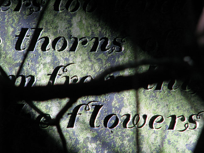 thornsflowers