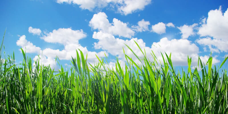 a digital photo of grassy field and blue sky with clouds