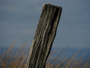 A fence post, recently